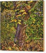 Nisqually Wildlife Refuge P12 The Maple Tree Wood Print