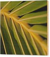 Niu - Cocos Nucifera - Hawaiian Coconut Palm Frond Wood Print