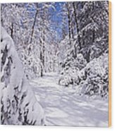 No Footprints Wood Print by Rob Travis