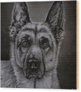Noble - German Shepherd Dog  Wood Print