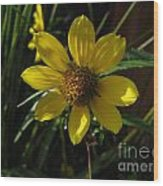 Nodding Bur Marigold Wood Print