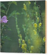 Nootka Rose And Yellow Toadflax Wood Print