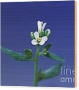 Normal Arabidopsis Plant Wood Print