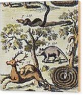 North America: Fauna Wood Print