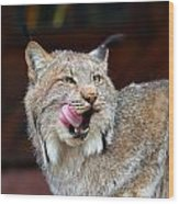 North American Lynx Wood Print