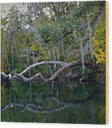 North Florida River Reflections Wood Print