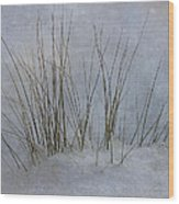 North Shore Wood Print