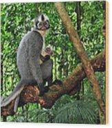 North Sumatran Leaf Monkey Presbytis Wood Print