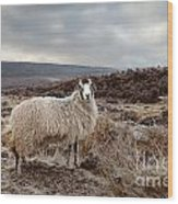 North York Moors Sheep Wood Print