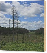 Northern Beauty Wood Print