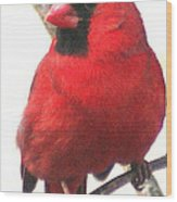 Northern Cardinal Closeup Wood Print