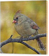 Northern Cardinal Female - D007849-1 Wood Print by Daniel Dempster
