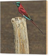 Northern Carmine Bee-eater Wood Print by Tony Beck