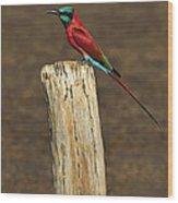 Northern Carmine Bee-eater Wood Print