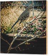 Northern Mockingbird On The Highline Wood Print