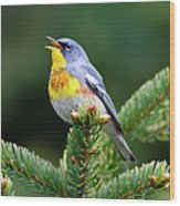 Northern Parula Parula Americana Male Wood Print