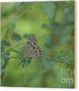 Northern Pearly Eye Butterfly Wood Print