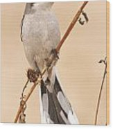 Northern Shrike Wood Print