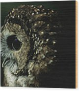 Northern Spotted Owl Strix Occidentalis Wood Print