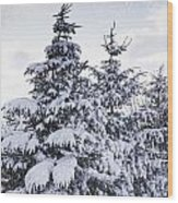 Northumberland, England Snow-covered Wood Print