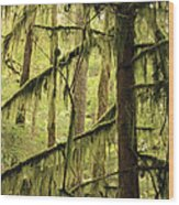 Northwest Mossy Tree Wood Print
