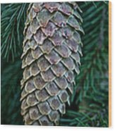 Norway Spruce Cone Wood Print