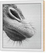 Nose Wood Print