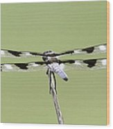 Dragonfly - Not Wilbur's And Orville's Idea Was It Wood Print