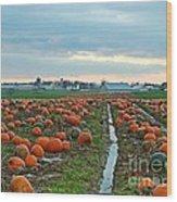 November Pumpkins Wood Print