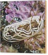 Nudibranch Eggs Wood Print by Alexander Semenov