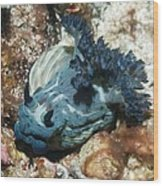 Nudibranch Wood Print