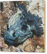 Nudibranch Wood Print by Georgette Douwma