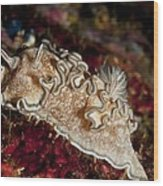 Nudibranch Wood Print