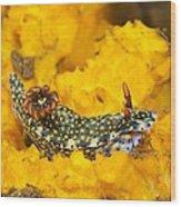 Nudibranch On Sponge Wood Print