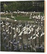 Number Of Flamingoes Inside The Jurong Bird Park In Singapore Wood Print