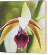 Nun's Cap Orchid -5 Wood Print