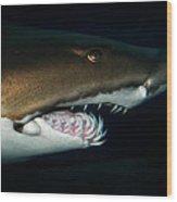 Nurse Shark Wood Print