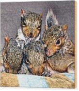 Nut Brothers Wood Print