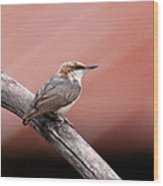 Nuthatch - Bird - Barn Roof Wood Print
