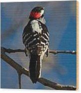 Nuttalls Woodpecker Wood Print