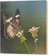 Nymphalid Butterfly Cethosia Luzonica Wood Print