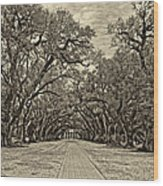 Oak Alley 3 Antique Sepia Wood Print