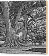 Oak Alley Backyard Monochrome Wood Print