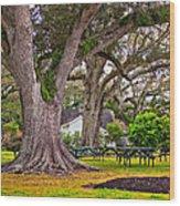 Oak Alley Backyard Wood Print
