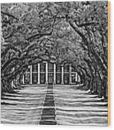 Oak Alley Monochrome Wood Print by Steve Harrington
