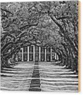 Oak Alley Monochrome Wood Print