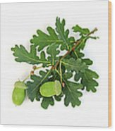 Oak Branch With Acorns Wood Print by Elena Elisseeva