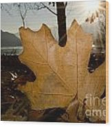 Oak Leaf In Backlight Wood Print