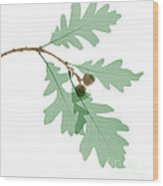 Oak Leaves, X-ray Wood Print
