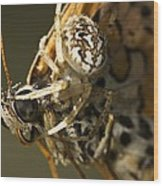 Oak Spider And Prey Wood Print by Paul Harcourt Davies